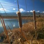 Dankworth Pond - Tucson Fishing program